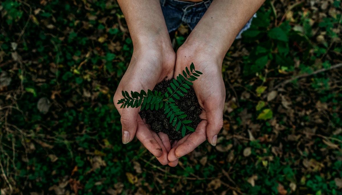 Fondos de inversión sostenibles: todo lo que debes saber sobre ellos